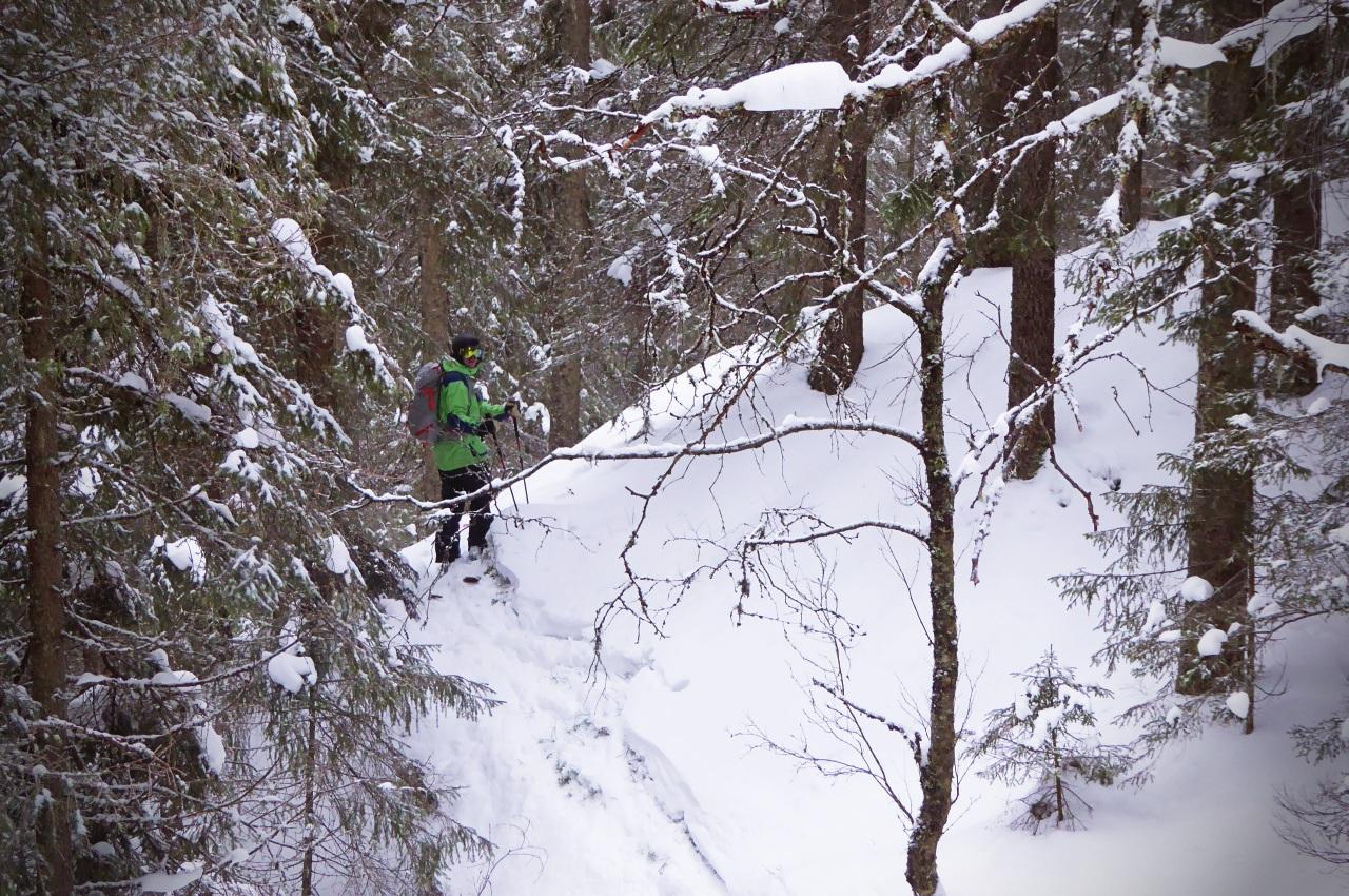 Maridalsalpene: Bynær topptur i eventyrskog