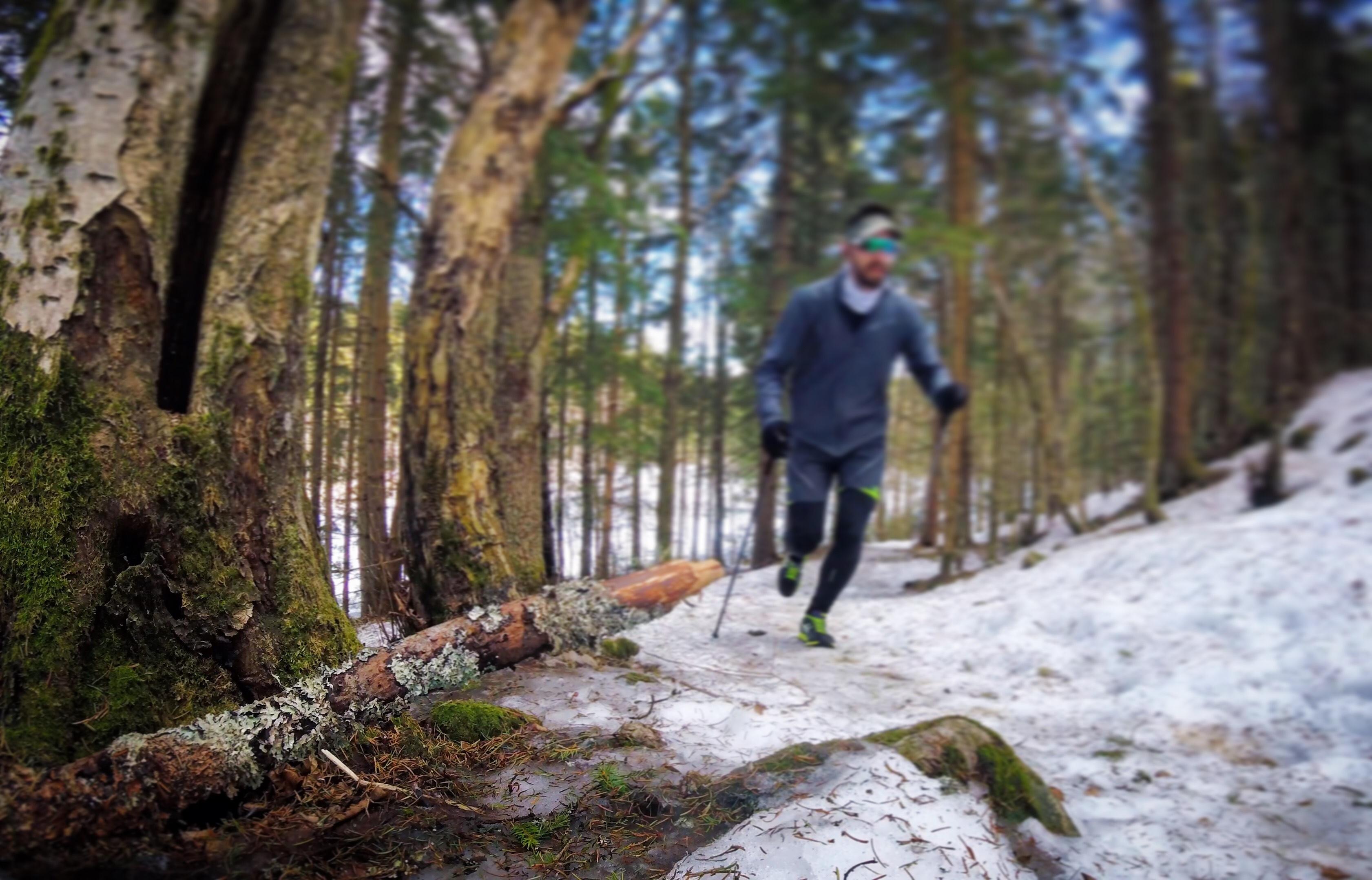 Det smelter i skogen